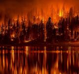 Free Photo - Forest Fire