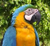 Free Photo - Colorful Macaw
