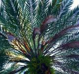 Free Photo - Palm Fronds