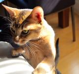 Free Photo - Pet Cat