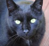 Free Photo - Black Cat