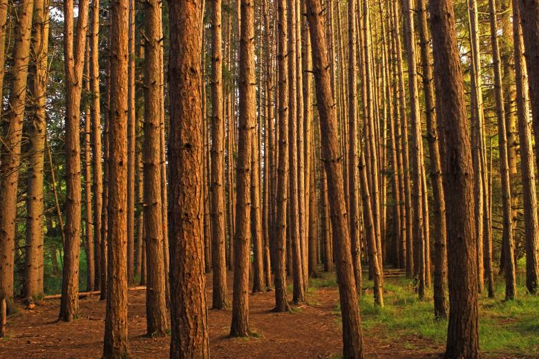 Tree Trunks - Free Forest Stock Photos