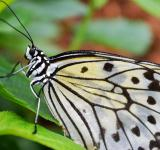 Free Photo - Wild Butterfly