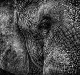 Free Photo - Old Elephant
