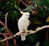 Free Photo - White Parrot in the Zoo