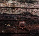 Free Photo - Grunge Gritty Wood Texture