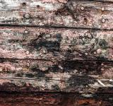 Free Photo - Gritty Wood Texture Background