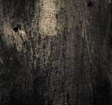Free Photo - Gritty Rusted Background