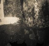 Free Photo - Gritty Rust Texture