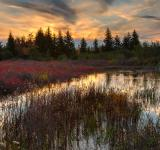 Free Photo - Autumn Dolly Sods Sunset - HDR