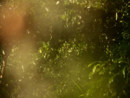 Blur nature tropical abstract background - Free Stock Photo