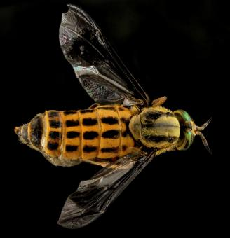 Deer Fly - Free Stock Photo