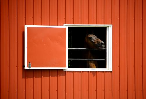 Horse Stable - Free Stock Photo