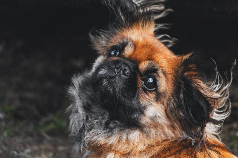 Black n Brown Pup - Free Dog Stock Photos