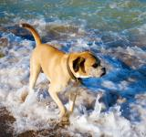 Free Photo - Dog in the Ocean