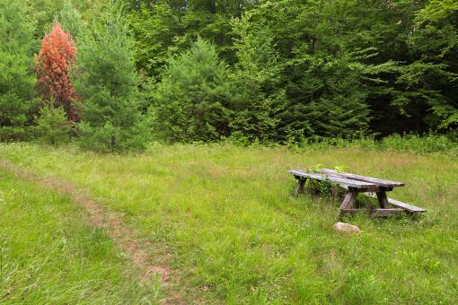 Off the Beaten Picnic Trail - Free Stock Photo