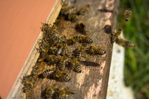 Bees entering bee hive - Free Stock Photo