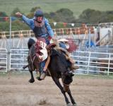 Free Photo - Cowboy Riding the Horse