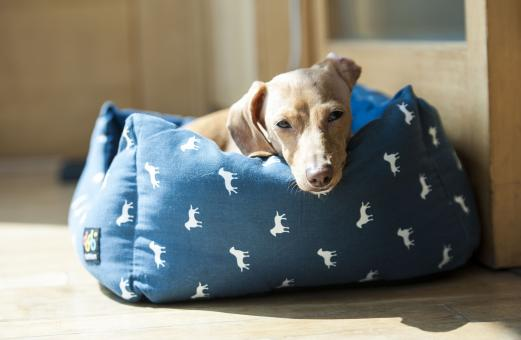 Dog on the Couch - Free Stock Photo