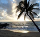 Free Photo - Palm Tree on the Beach