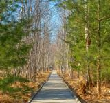 Free Photo - Jesup Boardwalk Trail - HDR