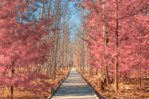 Jesup Boardwalk Trail - Tickle Me Pink HDR - Free Stock Photo