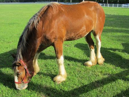 Clydesdale Farm - Free Stock Photo