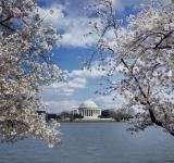 Free Photo - Jefferson Memorial