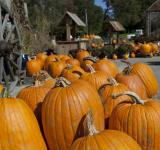 Free Photo - Bunch of Pumpkins