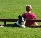 Free Photo - Border Collie