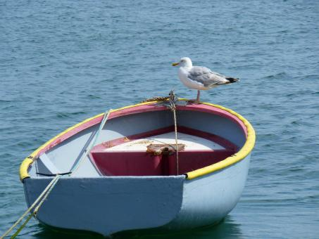 Seagull on the Boat - Free Stock Photo