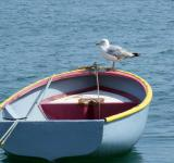 Free Photo - Seagull on the Boat