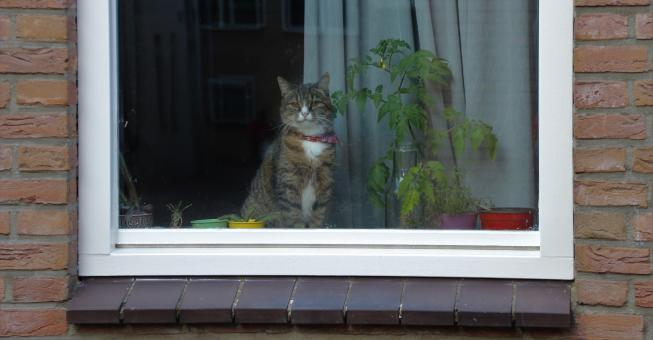 Cat in the Window - Free Stock Photo