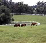 Free Photo - Horses in the Stable