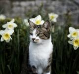 Free Photo - Cat in the Garden