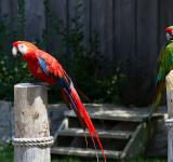 Free Photo - Macaw Birds
