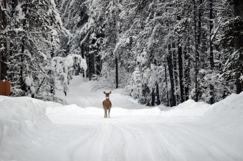 Deer in Winter - Free Winter Stock Photos