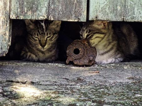 Feral Cats - Free Stock Photo