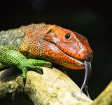 Free Photo - Colorful Lizard