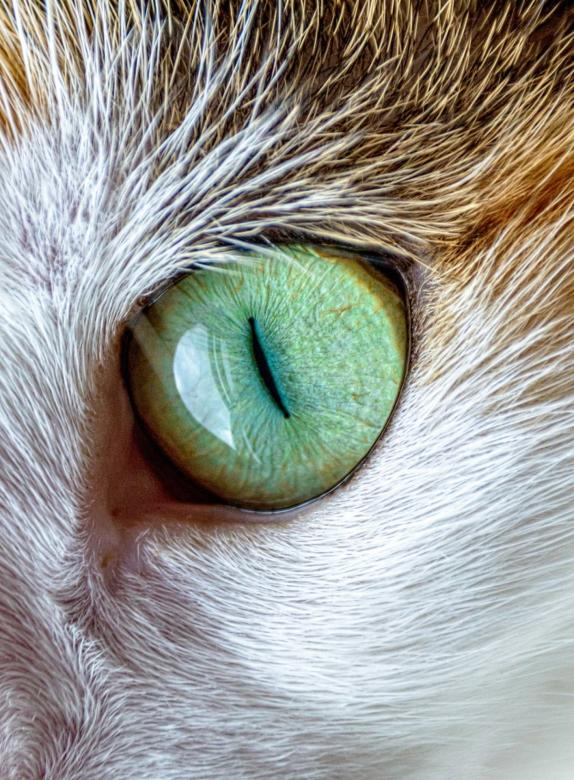 Free Stock Photo of Cat Eye Created by Pixabay