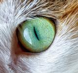 Free Photo - Cat Eye