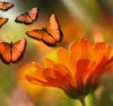 Free Photo - Butterflies in the Garden
