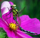 Free Photo - Dragonfly on the Flower
