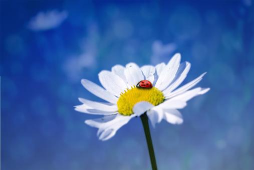 Ladybug in the Garden - Free Stock Photo