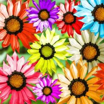 Gerbera Flowers - Free Stock Photo