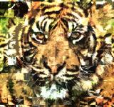 Free Photo - Tiger Texture