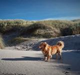 Free Photo - Dog on the Beach