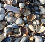 Free Photo - Mussels