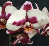 Free Photo - Wild Orchid