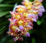 Free Photo - Fresh Orchids